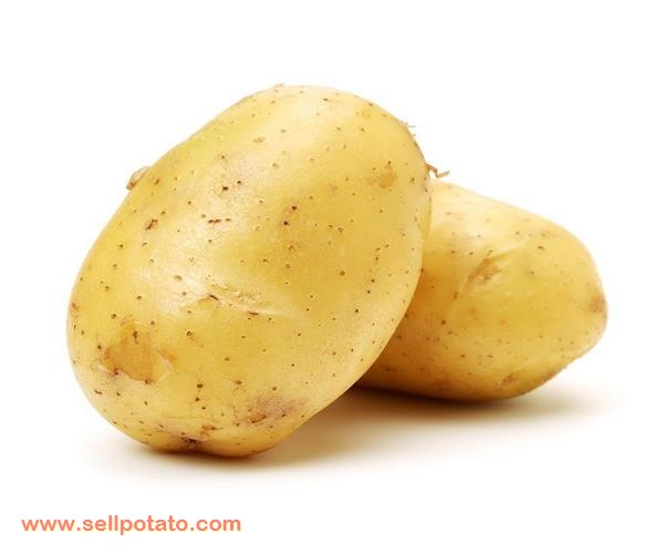 Who are Potato Export by Country?