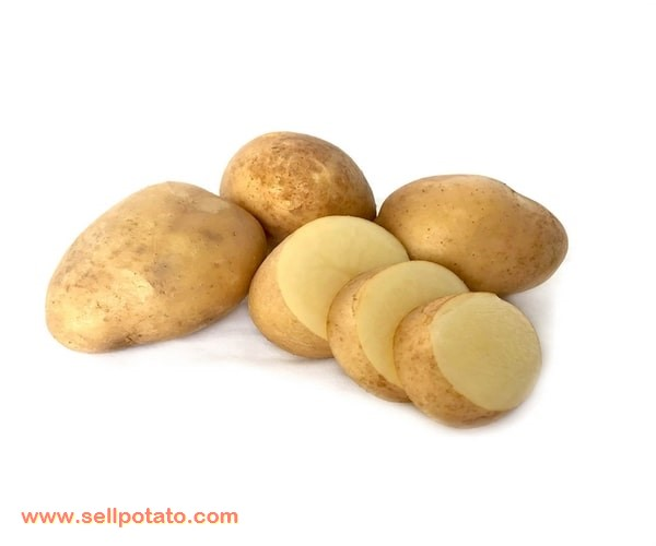 Potato export by country: Provided or maintained