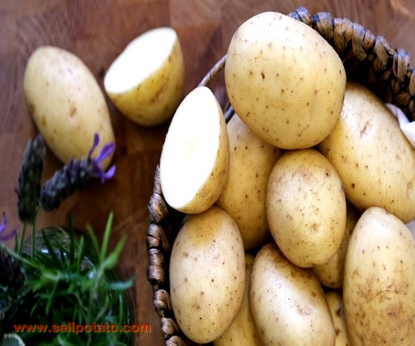 Statistics of export and sale potatoes in Iran