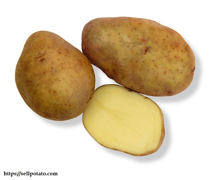 uses of Potato varieties