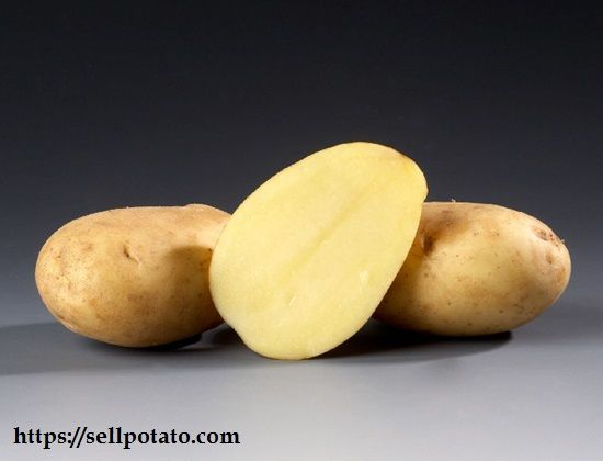 The growth period of different potato varieties