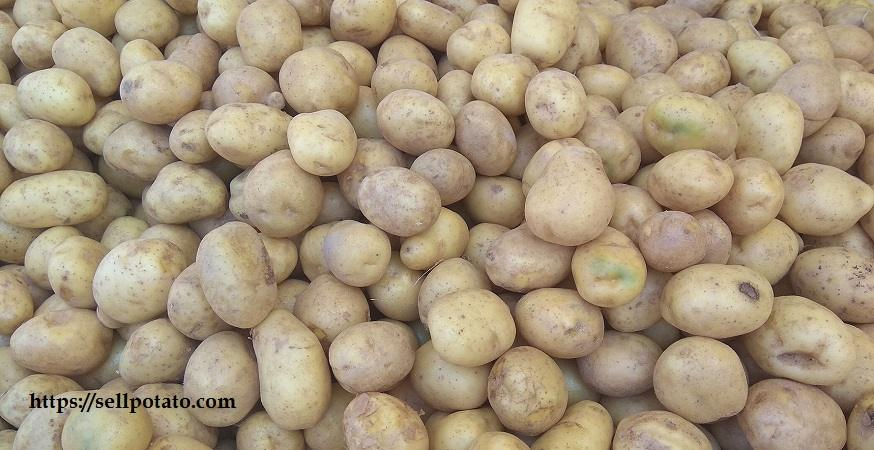 Prices of potatoes in Tehran market