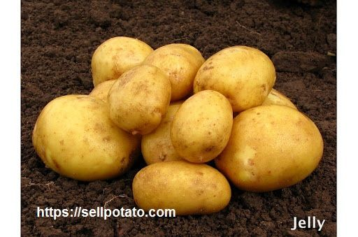 Wholesale export price of potatoes in Hamadan